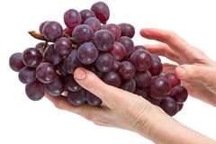 Brush of red grapes in the hand Stock Image
