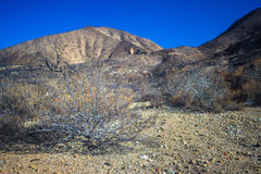 Brush in Rocky Desert Royalty Free Stock Images