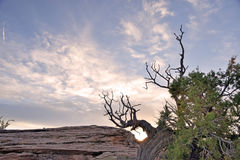 Brush Silhouette. Desert Brush Silhouette against sunset skies Royalty Free Stock Photos