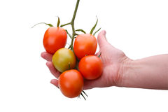 Brush of tomatoes on a palm Stock Photo