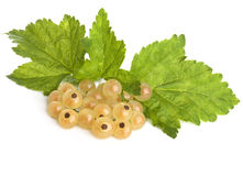 Brush of a white currant Royalty Free Stock Photography