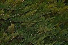 Brush wood. Green, closeup shot, on petrovaradin fortress Stock Photos