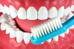 Brush your teeth! royalty free stock image