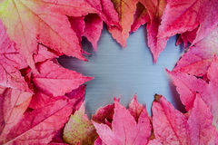 Brushed metal autumn leaves Royalty Free Stock Image