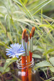 Brushes with chicory flower in a bottle on the background of gra Royalty Free Stock Images