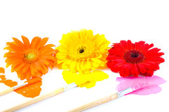 Brushes with paints. Royalty Free Stock Photos