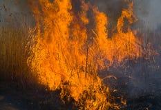 16 brushfire火焰 免版税图库摄影