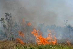 brushfire Photographie stock