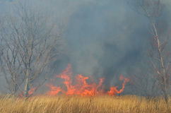Brushfire 18. A landscape on brushfire: flame, smoke, ash, trees and dark sky royalty free stock photos