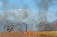 Brushfire 18. A landscape on brushfire: flame, smoke, ash, trees and sky stock photography