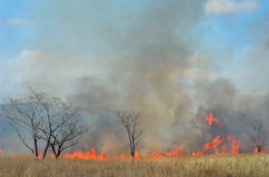 Brushfire. A landscape on brushfire: flame, smoke, ash, trees and sky royalty free stock image