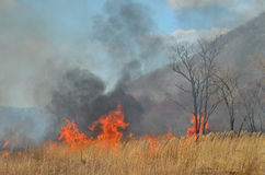 Brushfire 19. A landscape on brushfire: flame, smoke, ash, trees and sky stock photo