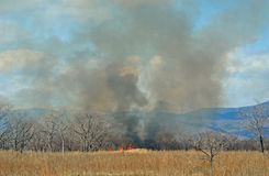 Brushfire 24. A landscape on brushfire: flame, smoke, ash, trees and sky stock images