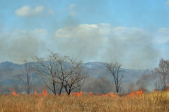 Brushfire 20. A landscape on brushfire: flame, smoke, ash, trees and sky stock photos