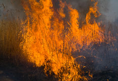 16 brushfire płomień Fotografia Royalty Free