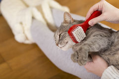 Brushing the cat Royalty Free Stock Images