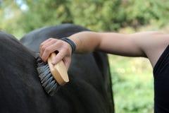 Brushing an horse stock photos