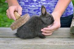Brushing Rabbit Royalty Free Stock Photo