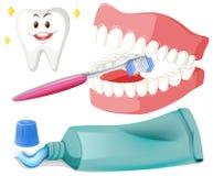 Brushing teeth with brush and paste Stock Image