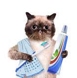 Brushing teeth cat. Creative. Stock Image