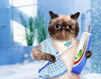 Brushing teeth cat. Stock Photos
