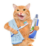 Brushing teeth cat. Isolated on white Stock Photo