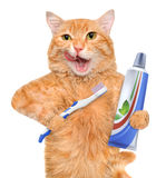 Brushing teeth cat. Stock Images