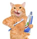 Brushing teeth cat. Isolated on white stock images