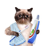 Brushing teeth cat. Stock Photo