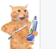 Brushing teeth cat. Stock Image