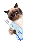 Brushing teeth cat. The white banner. Stock Photos