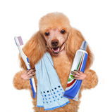 Brushing teeth dog Stock Photography