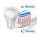 Brushing Teeth Morning and Evening Royalty Free Stock Image