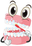 Brushing teeth with toothbrush Royalty Free Stock Photo