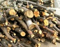 Brushwood Stock Image
