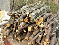 Brushwood Royalty Free Stock Images