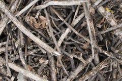 Brushwood background. Brushwood in the forest. Brushwood background. Brushwood in the forest Royalty Free Stock Photo
