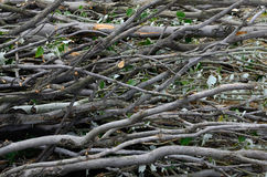 Brushwood bunch Royalty Free Stock Photography