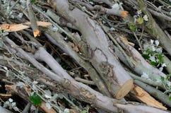 Brushwood bunch Royalty Free Stock Image