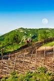 Brushwood fence Royalty Free Stock Image
