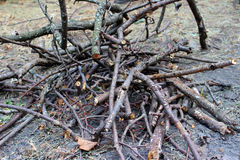 Brushwood for open fire. Stock Photo
