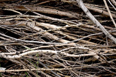 Brushwood Stock Photos