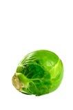 brussel - росток Стоковое Изображение