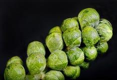 Brussel - черенок ростков Стоковое Изображение