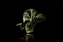 Brussel sprout Royalty Free Stock Image