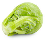 Brussel sprout Royalty Free Stock Images