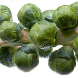 Brussel Sprout Stem Stock Photos