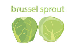 Brussel sprout vector. Illustration Royalty Free Stock Images