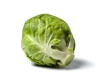 Brussel sprout with water droplets stock photography