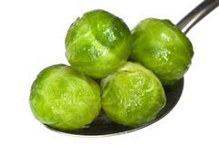 Brussel Sprouts. Sauteed brussel sprouts on a serving spoon, isolated on white background stock photography